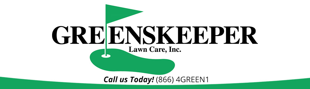 lawn grubs life cycle central connecticut lawn care service greenskeeper lawn care